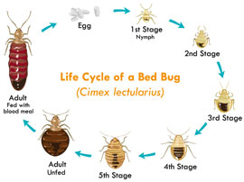 bed bug extermination los angeles