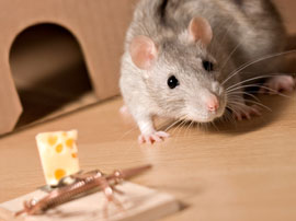 rodent pest control removal los angeles
