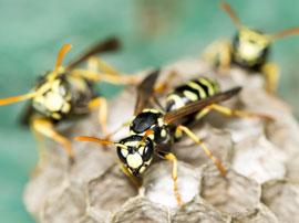 wasp pest control los angeles